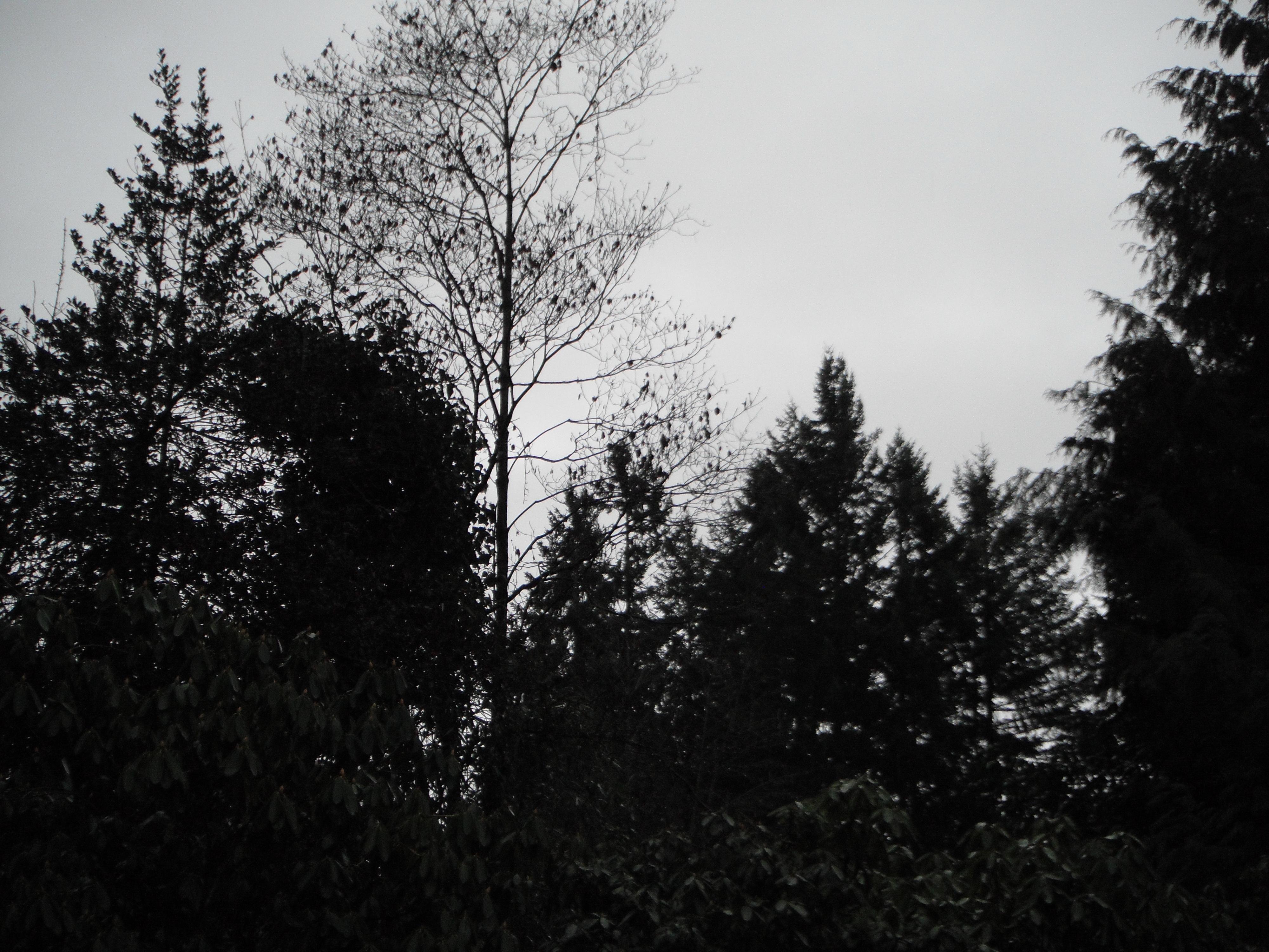 Jan 13