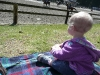 LiliBee watches the horses.