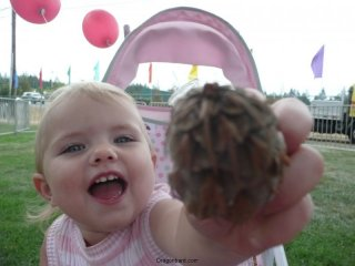 Look a pine-cone!