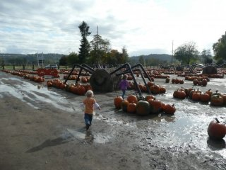 Muddy pumpkin patch.