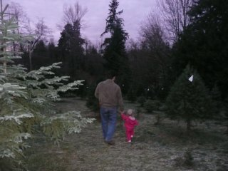 Christmas tree hunting.