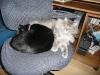 Luna snuggles.