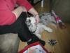 Maisy on Christmas.