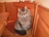 Radio kitty.