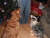 The puppies wait for their gift.