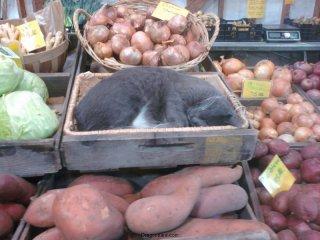 Farm cat.