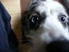 Maisy, close-up.