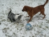 Puppy fun in the snow.