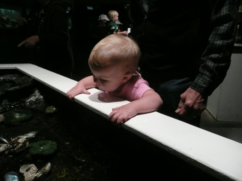 LiliBee at the aquarium.