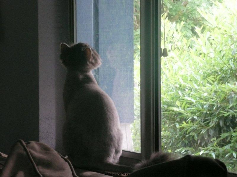 Watch cat.