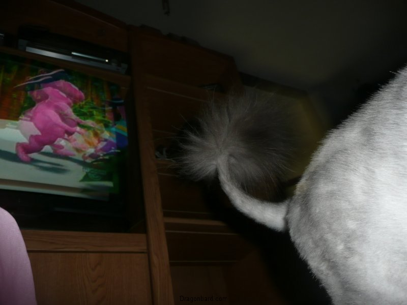 An artistic picture of Radio\'s bum, by CareBear.