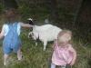 Goats at Grandma\'s!