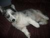 Maisy thinks she\'s a big dog.