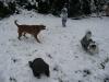Puppies like snow, too.