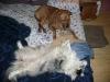 Sleeping dogs.
