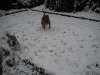 Lucy and Maisy in the snow.