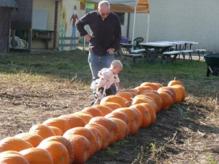 LiliBee touches a pumpkin.