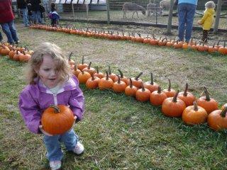 CareBear got a splinter from her pumpkin.