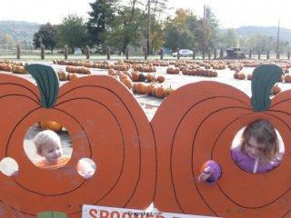 Pumpkin girls.