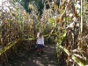 Into the corn maze...