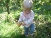 LiliBee picks an apple.
