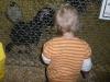 LiliBee meets a turkey.