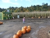 CareBear surveys the pumpkin patch.