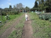 LiliBee heads to the orchard.