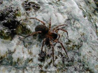 The Unknown Spider