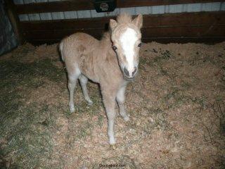 New baby horse.